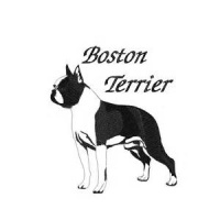 T-Bo Boston Terriers